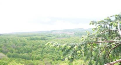 Grimpe d'arbre Caen