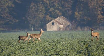 Balade à la lanterne et Soirée brame du cerf à Nevers