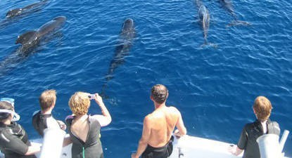 Sortie d'observation en bateau des Dauphins et Baleines à Cannes