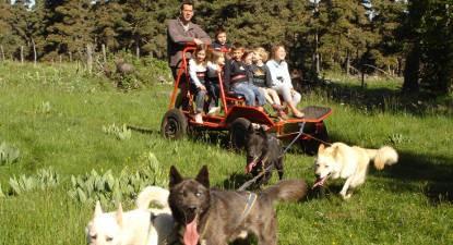Balade en cani-kart sur l'Aubrac