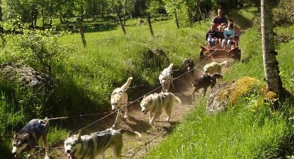 Initiation à la conduite en cani-kart sur l'Aubrac