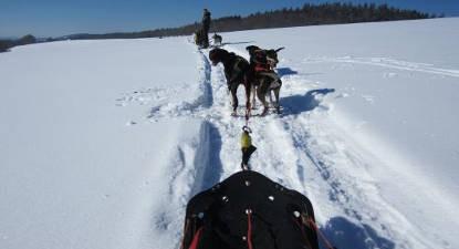 Initiation à la conduite de chien de traîneau dans le Jura
