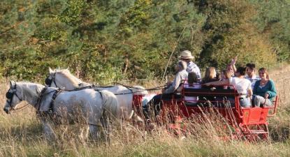 Balade en Calèche en forêt Brotonne près de Rouen