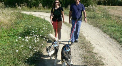 Cani-randonnée près d'Angers