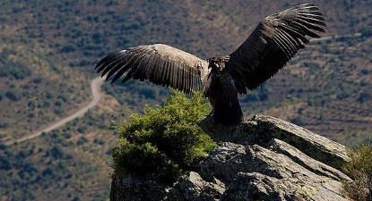 Stage de survie de 7 jours au Portugal au Parque Natural do Douro
