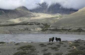 Stade de survie au haut Mustang et de l'Himalaya