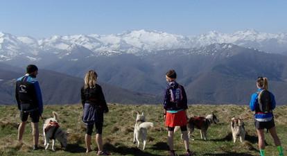 Cani randonnée au Monts d'Olmes en Ariège