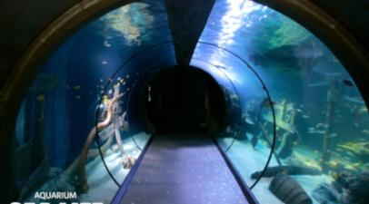 Visite d'un aquarium à Val d'Europe près de Paris et Meaux