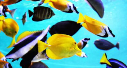 Visite d'un aquarium à Val d'Europe