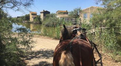 Promenade en calèche près de Montpellier à la découverte de la Camargue