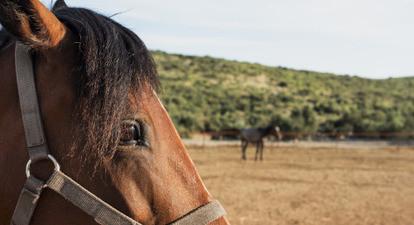Randonnée à cheval en Provence près de Marseille
