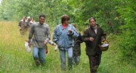 Balade à la Decouverte des Champignons près de Nevers