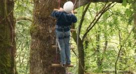 Grimpe arbres Brive-la-Gaillarde