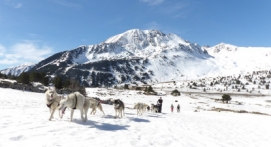 Balade chiens de traineau et raquettes près de Foix