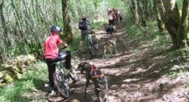 Balade en Cani VTT dans le Jura près de Lons-le-Saunier
