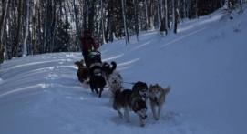 Journée chiens de traineaux aux Monts d'Olmes