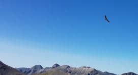 Randonnée ornithologique à Allos dans le Mercantour