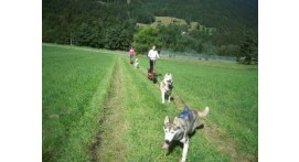 Balade en Cani Trottinette dans le Jura près de Lons-le-Saunier