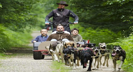 Cani-rando ou Cani-kart à Névache