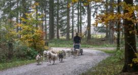 Randonnée pédestre ou en kart avec des Husky en Normandie