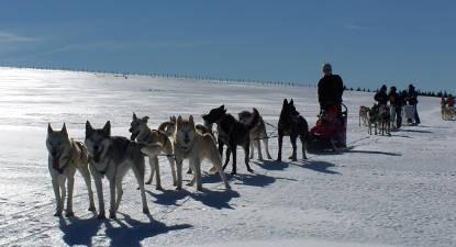 Balade en chien de traîneau ou cani-kart sur l'Aubrac